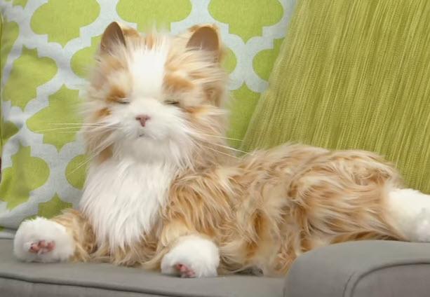 Tabby Cat Hasbro